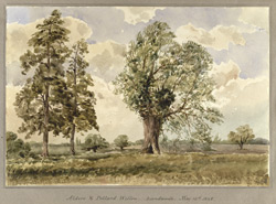 Alders & Pollard Willow, Landwade, Cambridgeshire, 1848